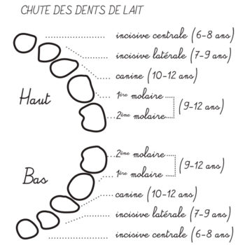 Ordre de la chute des dents de lait