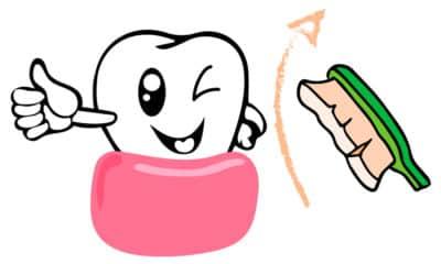 De la gencive vers la dent